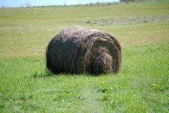 Summertime roll of just baled hay Royalty Free Stock Photos