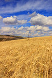 Summertime: rural landscape .Cornfield topped by clouds.Apulia (ITALY). Agricultural landscape: hills with cornfields. Golden wheat ears dominated by clouds royalty free stock images