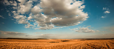 Summertime rural panorama Royalty Free Stock Photo