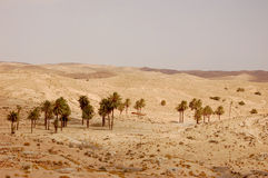 Summertime Sahara desert in Tunisia Royalty Free Stock Image