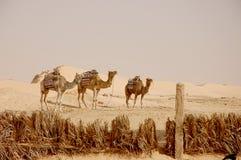 Summertime Sahara desert in Tunisia Royalty Free Stock Images