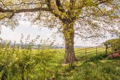 Summertime scenery in the English countryside. A summertime scene around the English countryside of the United Kingdom Royalty Free Stock Photos