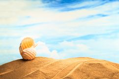 Summertime Seasonal, white yellow seashell on the sandy beach with sunny colorful blue sky background and copy space. Traveling. And feeling lonely, cheering up Stock Images