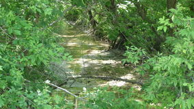 Summertime Stream. A stream flowing through a green, lush forest during the Summer Royalty Free Stock Images