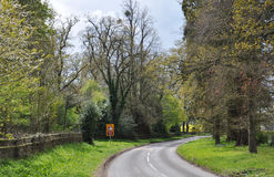 Summertime trees and country road in the British countryside. Stock Image