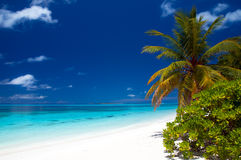 Summertime at a tropical beach. On the maldives Royalty Free Stock Photo