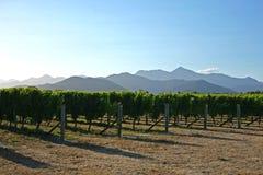Vineyards of Marlborough in New Zealand stock photo