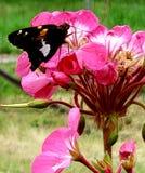 SummerTimeBeauty royalty-vrije stock afbeelding