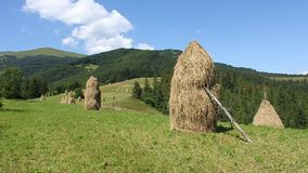 Summery Carpathians Royalty Free Stock Images