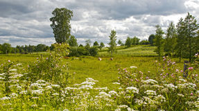 Summery cow pasture. Thundery atmosphere at a summery cow pasture in the south of Sweden Stock Photography