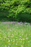 Summery floral meadow. In the woods Stock Photography