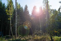 Summery glade in the forest. Summery glade in the mixed forest with backlight and lens flare Stock Photography