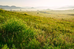 The summery meadow Royalty Free Stock Images