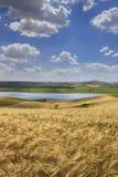 Summetime农业 意大利的农村夏天风景 在普利亚和巴斯利卡塔之间:有麦田的多小山乡下 免版税库存照片