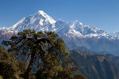 Summit of Dhaulagiri from South. View of Dhaulagiri from Jaljala La, Dhaulagiri Himal, Nepal Royalty Free Stock Images