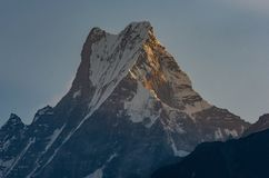 Summit of Machapuchare Fish Tail being hit by first sunshine golden hour, Himalayas stock image
