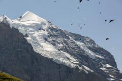 Summit of Mount Jungfrau with mountain jackdaw, Grindelwald, Bernese Oberland, Switzerland Royalty Free Stock Photography