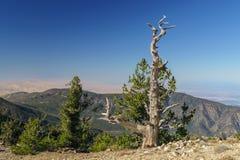 Summit of Mount Pinos Stock Image