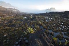 Summit of Mount Roraima, strange world made of volcanic black st Stock Photography