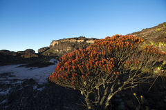 Summit of Mount Roraima, volcanic stones and red endemic plants. Landscape at the top of Mount Roraima in the morning with blue sky. Black volcanic stones royalty free stock photos
