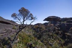 Summit of Mount Roraima, world made of strange volcanic black st Royalty Free Stock Image