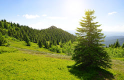 Summit of mountain Grosser Arber, Germany. Royalty Free Stock Image