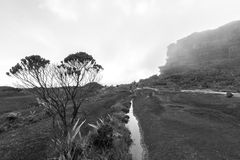 Summit of Mt Roraima, volcanic black stones and endemic plants. Landscape at the top of Mount Roraima in the morning. Strange shaped black volcanic stones stock photos