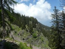 Summit rock panorama landscap of the mountains in italy south tyrol europe. Europe italy south tyrol mountains summit rock trees forest nature forest trees royalty free stock photos