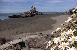 Sumner nabrzeżny nadmorski Christchurch, Nowa Zelandia - Zdjęcie Stock