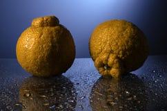 Sumo-Orangen Lizenzfreies Stockbild