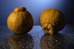 Sumo Oranges. A pair of water glistening Sumo oranges against blue background Royalty Free Stock Image