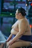 Sumo in Thailand stockbilder