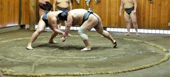 Sumo wrestler fighters tain in sumo stables preparing for sumo tournament held in Tokyo Japan Royalty Free Stock Photos