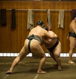 Sumo wrestler fighters tain in sumo stables preparing for sumo tournament held in Tokyo Japan Stock Image