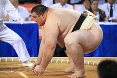 Sumo wrestler ready to attack Royalty Free Stock Photo