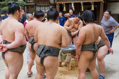 Sumo Wrestlers Pounding Mochi. FUKUOKA, JAPAN - NOVEMBER 6, 2016: A group of junior sumo wrestlers pound rice in a crucible with a wooden mallet in the Stock Photography