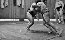 Sumobrottare som utbildar i sumostall Fotografering för Bildbyråer
