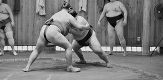Sumobrottare som utbildar i sumostall Royaltyfria Foton