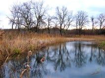 Sumpf Stockbilder