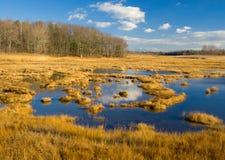 Sumpf Stockbild
