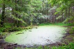 Sumpf Lizenzfreies Stockbild