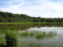 Sumpf in Ain, Frankreich lizenzfreies stockbild