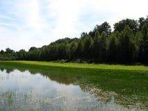Sumpf in Ain, Frankreich lizenzfreie stockbilder