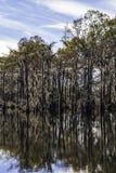Sumpf-Baum-Moos lizenzfreies stockbild