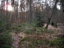 Sumpf in den Vosges Lizenzfreie Stockfotografie