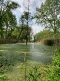 Sumpf gemalt im Grün lizenzfreie stockbilder