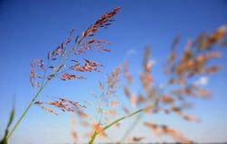 Sumpf-Gras stockfotografie