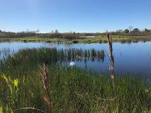 Sumpf Gras und Wildflowers im Sumpf lizenzfreie stockfotos