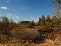 Sumpf im Holz Lizenzfreie Stockfotos