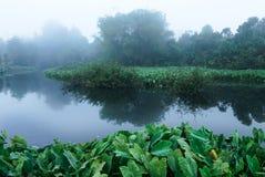 Sumpf im Nebel Lizenzfreies Stockbild